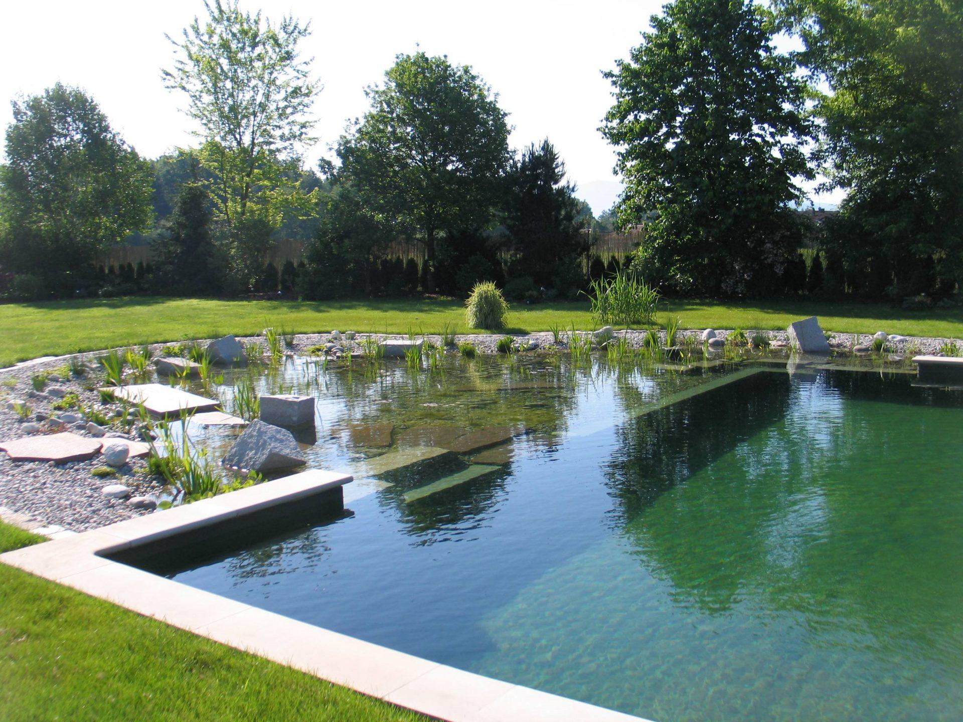 piscine naturelle dans un jadin